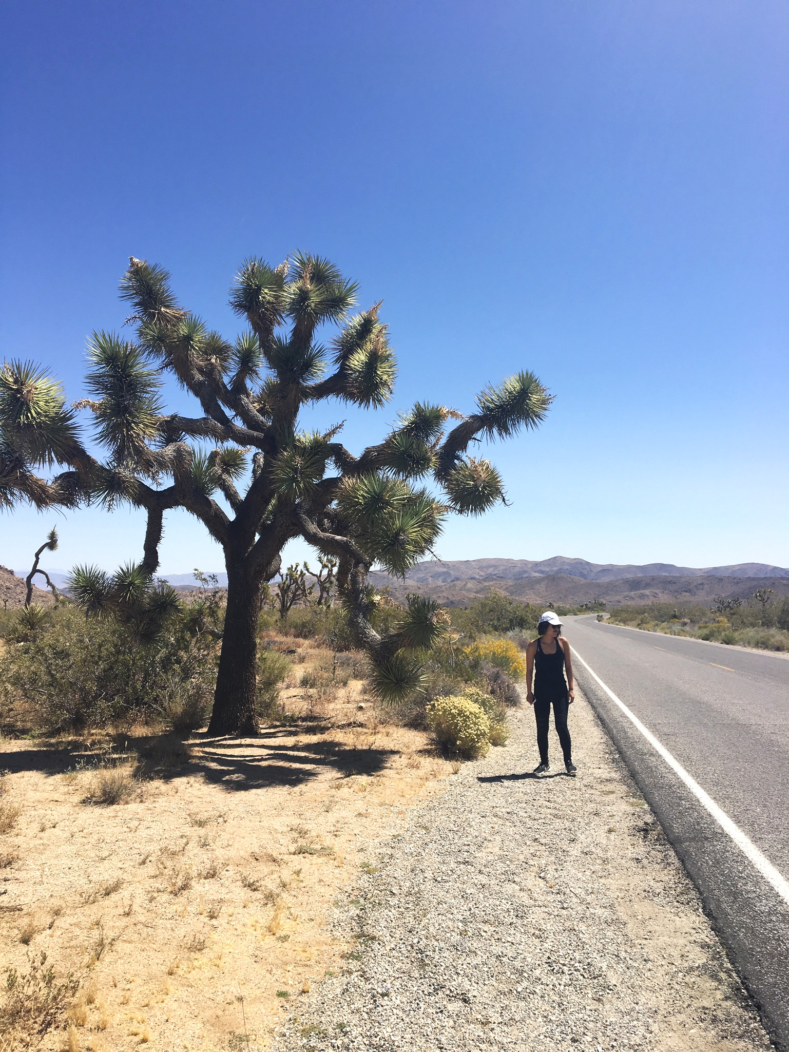 #TravelThursday : Desert Life